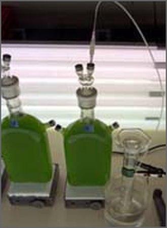 Water splitting - An algae bioreactor for hydrogen production.