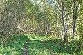Alkšņu ieskauts ceļš, Suntažu pagasts, Ogres novads, Latvia - panoramio.jpg