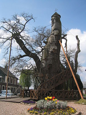 Allouville-Bellefosse - Thousand-year-old oak tree