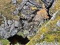 Allt Loch na Caillich - geograph.org.uk - 863417.jpg