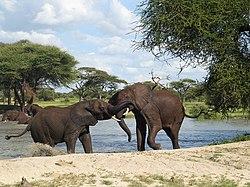 Amani-Afrika-Ltd.jpg