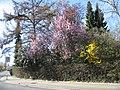 An der Palmweide, Dortmund, 20.3.14 - panoramio (2).jpg