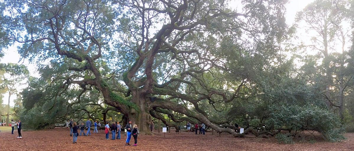 Angel Oak South Carolina