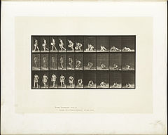 Animal locomotion. Plate 269 (Boston Public Library).jpg