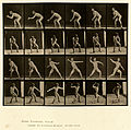 Animal locomotion. Plate 283 (Boston Public Library).jpg
