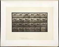 Animal locomotion. Plate 683 (Boston Public Library).jpg