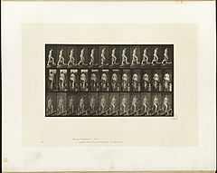 Animal locomotion. Plate 81 (Boston Public Library).jpg