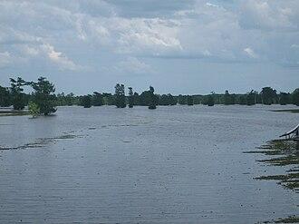 Lake Bistineau - A second view of Lake Bistineau