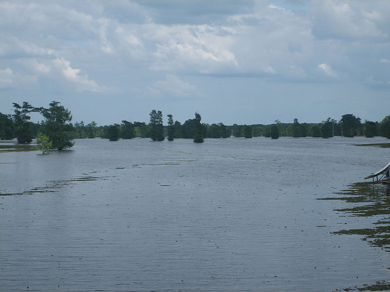 File:Another view of Lake Bistineau IMG 0592.JPG