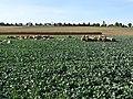 Ansichten von Deckenpfronn 125.jpg