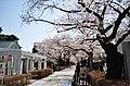 Aoyama Cemetery1c.jpg