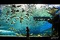 Aqua Park -Explored- (4729218549).jpg