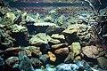 AquariumArtis.jpg