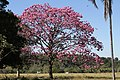 Araguainha - State of Mato Grosso, Brazil - panoramio (1094).jpg