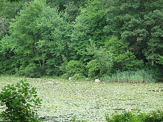 Connecticut College Arboretum - Image: Arb Lilly Pond