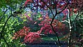 Arboretum de culands.jpg