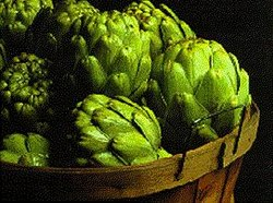 Globe Artichoke buds ready for cooking