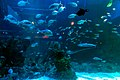 Assorted fish at Jakarta Aquarium, Neo Soho, Jakarta 2018-06-28 01.jpg