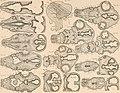 Atlas d'embryologie (1889) (20155663030).jpg