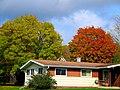 Autumn - panoramio (67).jpg