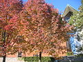 Autumn at the Chapel of the Resurrection 09.JPG