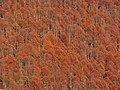 Autumn in Cansiglio 2.jpg