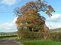 Autumn trees next to a farm lane - geograph.org.uk - 1589210.jpg