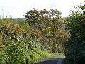 Autumnal scene - geograph.org.uk - 1069675.jpg