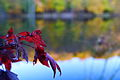 Autumun red leaf lake bokeh - West Virginia - ForestWander.jpg