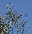 BIRD (14237979644).jpg