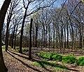 Baarn - Ravensteinselaan - Landgoed Groeneveld 3.jpg