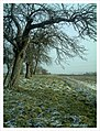 Backstrike Winter Colors - Magic Rhine Valley Photography - panoramio.jpg