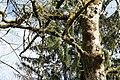 Bad Wildbad - Burghart 10 ies.jpg