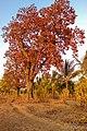 Badlapur Gaon, Badlapur, Maharashtra 421503, India - panoramio (33).jpg