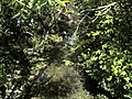Banat, Nera Canyon - panoramio (73).jpg