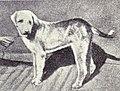 Banjara from 1915.JPG