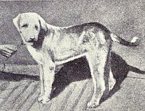 Vanjari Hound - Image: Banjara from 1915