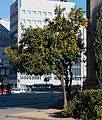 Barcelona - Platz Espanya 007.jpg