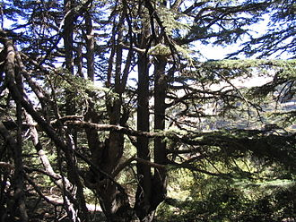 Al Shouf Cedar Nature Reserve - Inside the Barouk forest