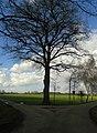 Baum an der Wegzweigung - panoramio.jpg