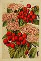 Beautiful flowering trees and shrubs for British and Irish gardens (1903) (20350249252).jpg