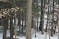 Beaverdale Region - panoramio (7).jpg
