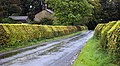 Beech hedge on Abbeystead Lane - geograph.org.uk - 585803.jpg