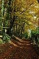 Beech trees, Woodchester Park - geograph.org.uk - 1040073.jpg