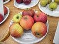 Belle de Pissy, Mons-Boubert, 80, Fr, fête de la pomme 10-2019 (2).jpg