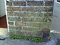 Benchmark on gents' toilets in Maumbury Road - geograph.org.uk - 2095165.jpg