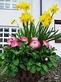 Bepflanzte Blumenschale Frühling.JPG