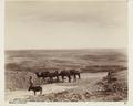 Bild från familjen von Hallwyls resa genom Algeriet och Tunisien, 1889-1890 - Hallwylska museet - 91949.tif