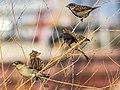 Birds (22846552496).jpg