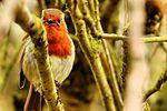 Birds Wildlife (16892880102).jpg